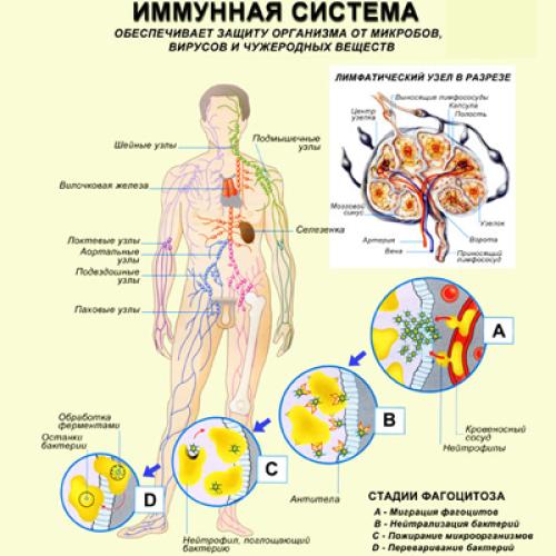 Средства для повышения иммунитета.