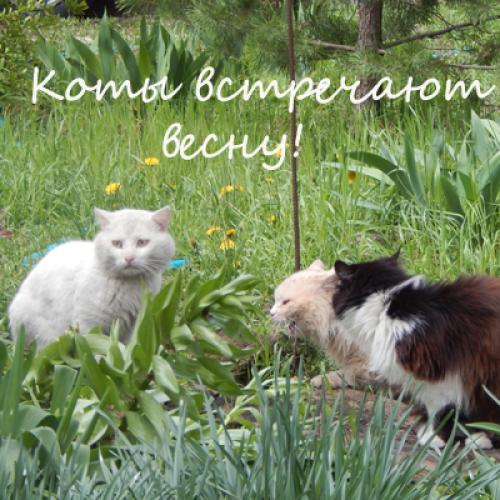 Видео Коты встречают весну!