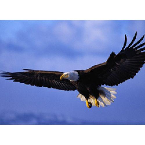 Видео: Парите вместе с орлами!
