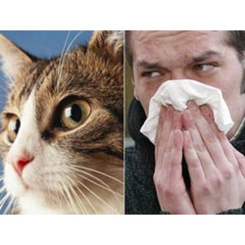 Видео: Профилактика аллергии с продукцией Форевер, врач рекомендует.