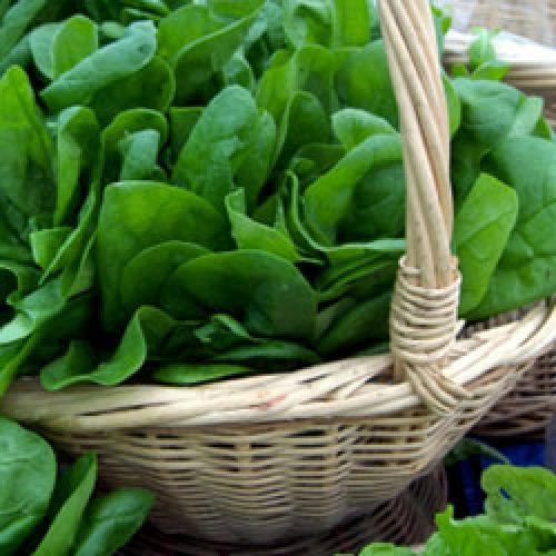 Как продлить молодость полезные свойства шпината.