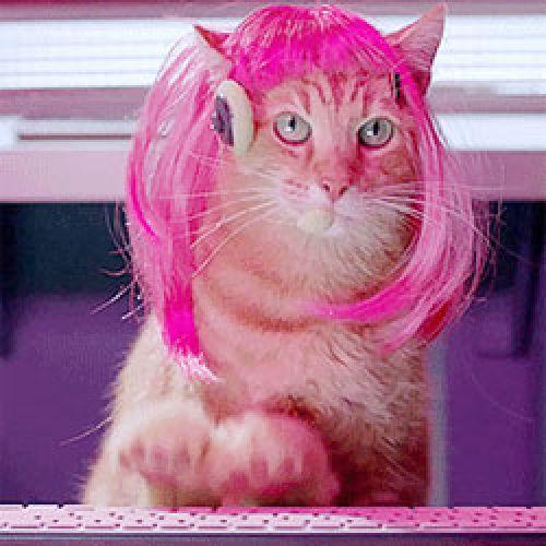 Синематограф Планета кошек