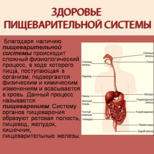 Профилактика заболеваний желудочно-кишечного тракта.