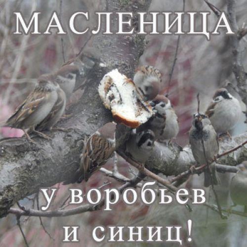 Видео Масленица у воробьев и синиц!