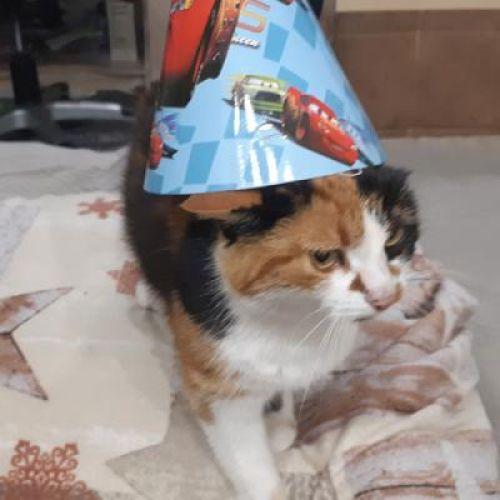 С днем рождения, Клеопатра!