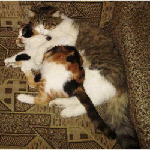 Как удалось победить аллергию на кошачью шерсть и тополиный пух?