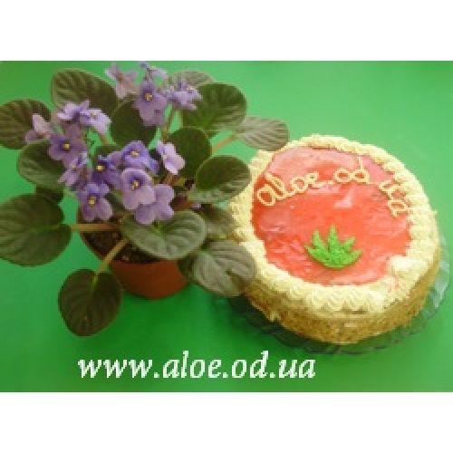 Vivat, Aloe.od.ua!