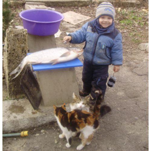 8 Марта у кошек и котов.