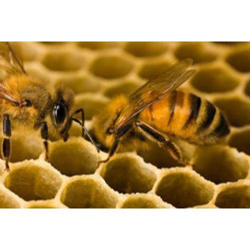 Пчелы, они гудят...